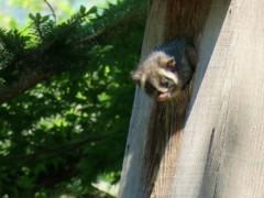 巣穴からキョロキョロ2