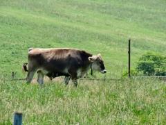 牛さんも暑そう