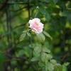 花 その6