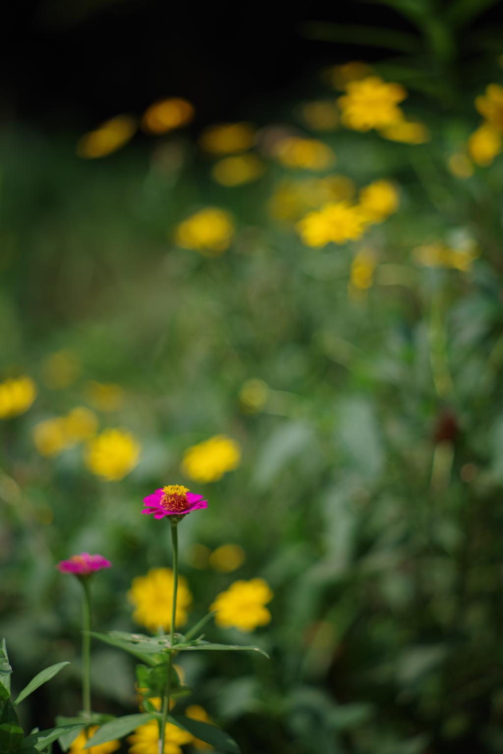散歩中の花 その5