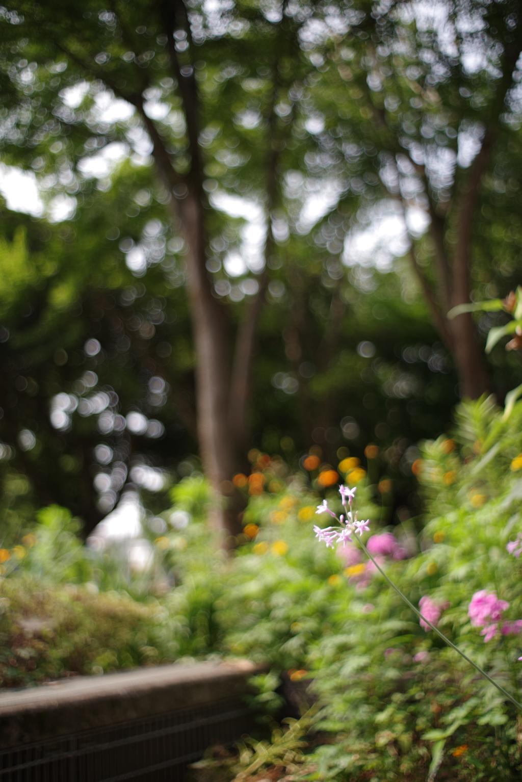 散歩中の花 その7