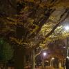 夜散歩で秋を撮る その5