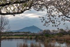 華やぐ水辺の春