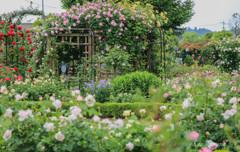 Rose Garden-2
