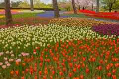 鮮やかに咲き競う