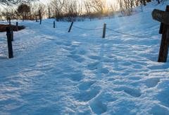 残雪を踏みながら探す富士