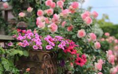 Rose Garden-1