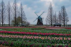 春旋律~♪