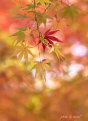 秋の陽だまり