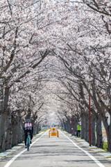 桜咲く・・りんりんロード