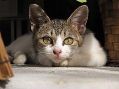 庭に住み着いた猫