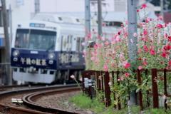 タチアオイと電車2