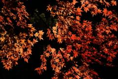 燃ゆる紅葉