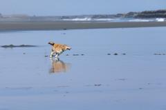 海辺を駆ける1