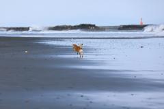 浜辺を独り占め