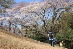 桜の木の下へ