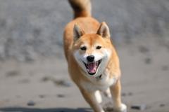 笑顔で走る