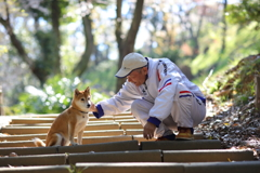 柴犬とおっちゃん