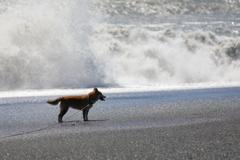 大波だー!