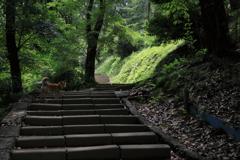 新緑の階段2