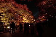 京都-奈良~紅葉のライトアップ~