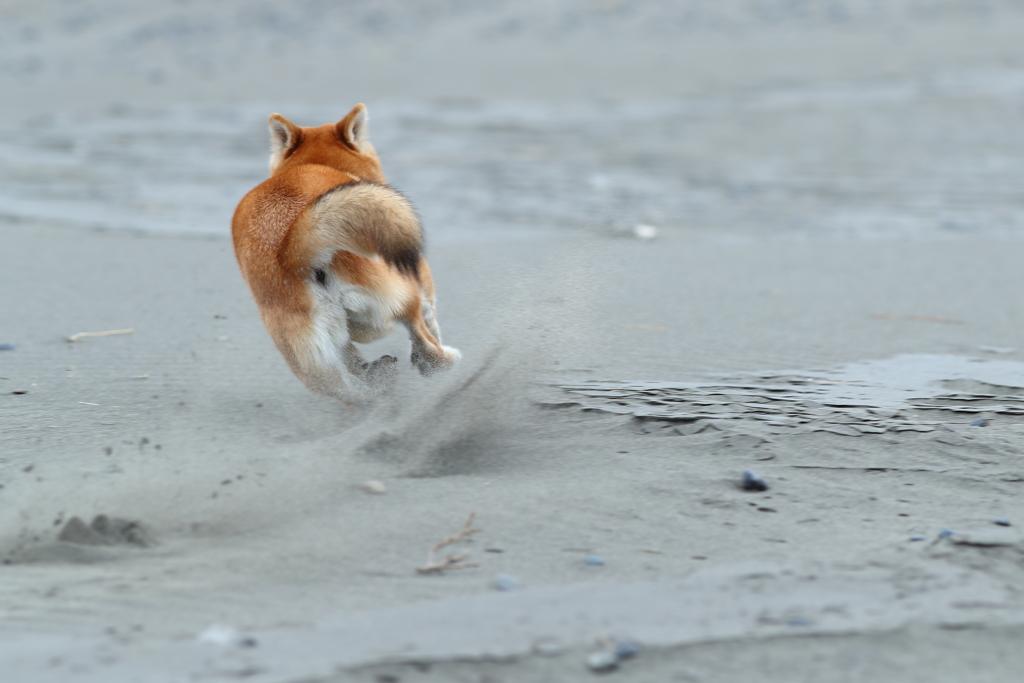 砂を蹴って