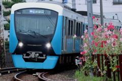 タチアオイと電車1