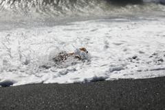 大波だー!うわぁー!