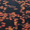 尾瀬~池も紅葉~