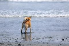 波とにらめっこ