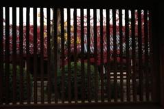 京都-奈良~格子越しの紅葉~