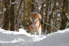 雪中ハイキング