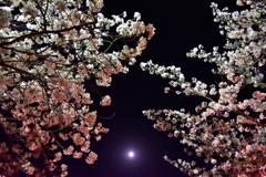 Sakura gradation and moon