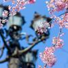 桜のある風景①