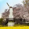 見沼見晴らし公園風車(さいたま市)