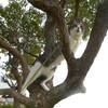 木登りソラ
