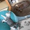 ソラ(猫)とアクビ(チワワ)