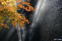 紅葉と噴水と、、、