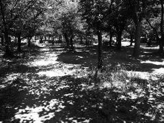 長居公園 I