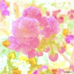私は此処でお花見を…
