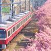 満開の春を行く赤い電車