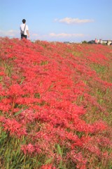 矢作川提の絶景