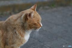 今日は猫の日②