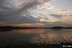 多々良沼(夕景)