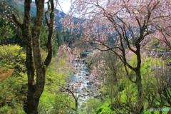 山里に春の訪れ