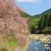 山里に春の訪れ②