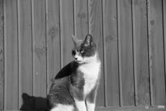 ネコも日光浴