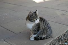 ネコは人間に見えないものが見える
