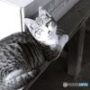 猫は名前を理解している