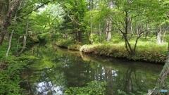 奥日光の森